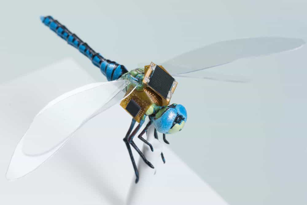 پروژه DragonflEye حشرات را به سایبرگ تبدیل میکند!