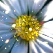 آلرژی و گرده گل