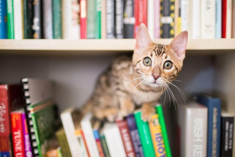 چرا از بین حیوانات خانگی، گربه ها بهتر از سگ ها هستند؟