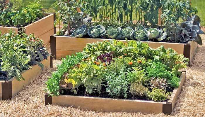 بازدهی بالای محصول در باغبانی فوت مربع