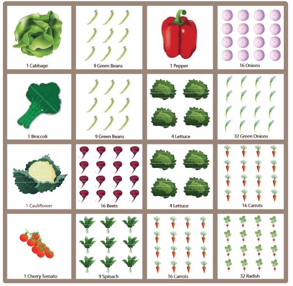 نقشه کاشت گیاهان در شیوه باغبانی فوت مربع