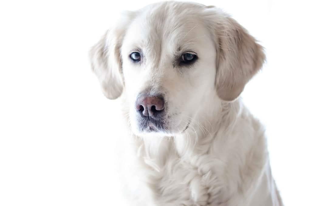 اهلی شدن سگها نخستین بار چگونه و در چه زمانی صورت گرفته است؟