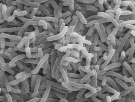 باکتری عامل بیماری وبا