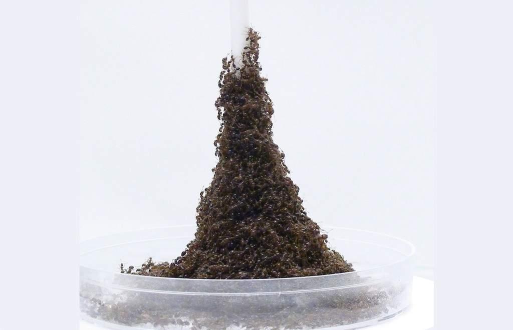 برج مورچهای