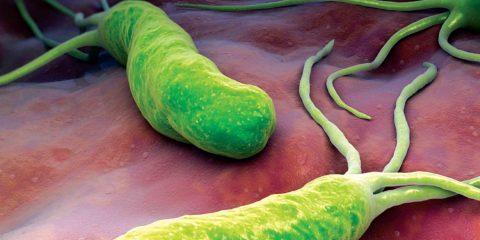 باکتری تاژکدار هلیکوباکتر پیلوری