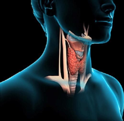 سرطان تیروئید: تعریف، عوامل ایجادکننده، نشانههای ابتلا و پیشگیری