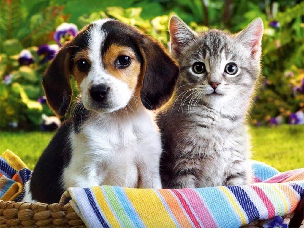 سگ و گربه