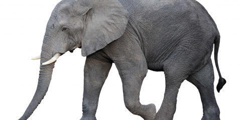 معرفی مترجم Hello in Elephant