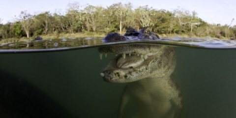معرفی هجده جانور عجیب و غریب