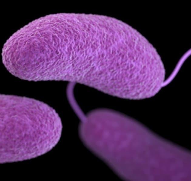 گونههای ویبریو و ناخوشیهایی که این گروه از باکتریها ایجاد میکنند