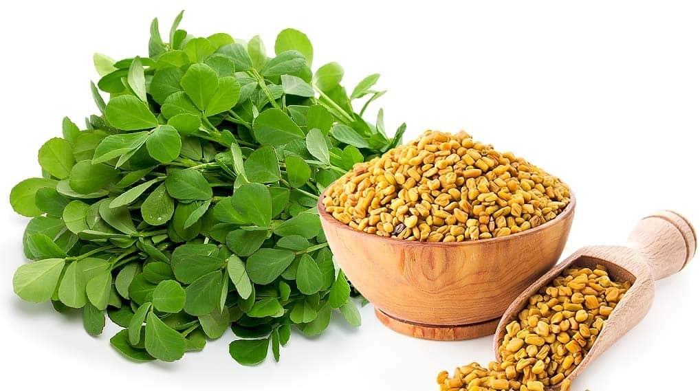 گیاه شنبلیله چیست؟