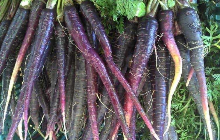 هویج سیاه و معرفی ۵ مورد از مزایای شگفتانگیز این ماده غذایی