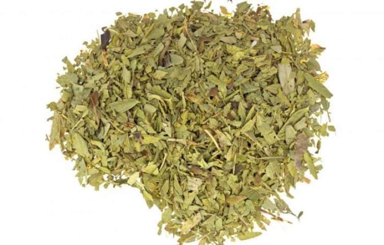 چای سنا ؛ فواید، عوارض، میزان مصرف توصیه شده و تداخلات دارویی