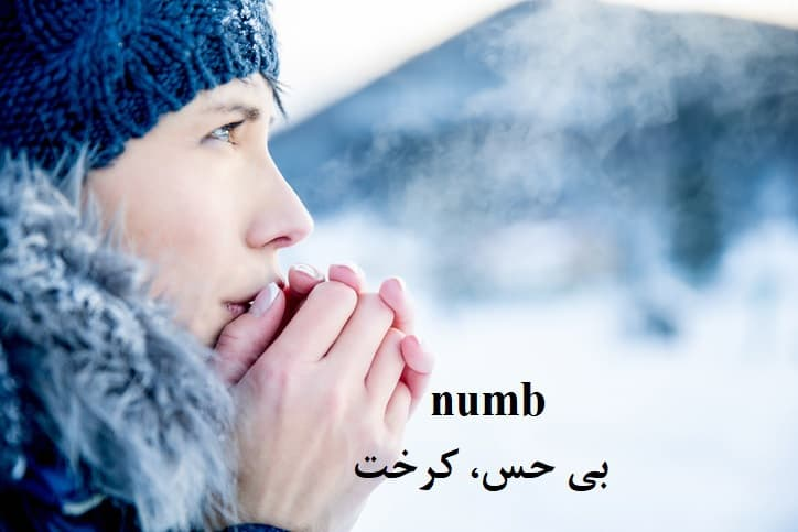numb = بی حس، کرخت