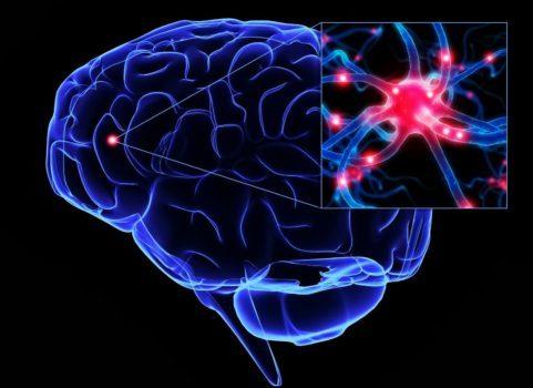 ارتباط موسیقی و مغز- تشکیل شبکه های نورونی جدید در مغز با موسیقی درمانی