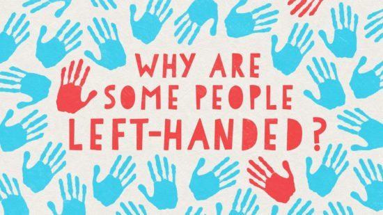 چرا بعضی انسان ها راست دست و مابقی چپ دست هستند؟