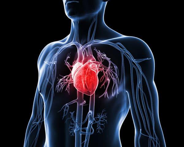 بیماری های  قلبی  چه نوع بیماری هایی هستند؟