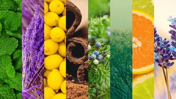 آثار جسمی و روانی استنشاق عطر و رایحههای خوش روی سلامت بدن