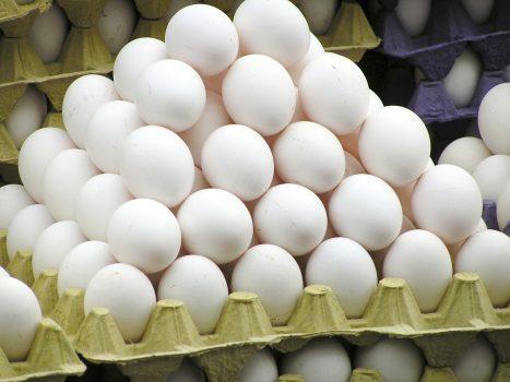 تخم مرغ از عوامل انتشار بیماریهای غذازاد