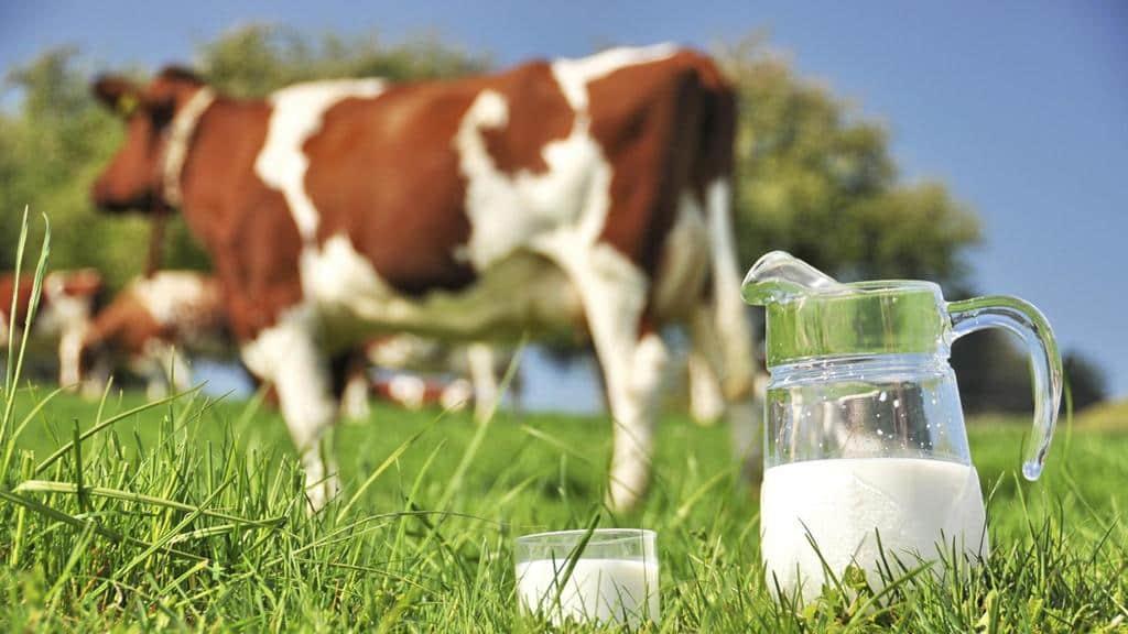 شیر خام و استفاده از چمنزار برای تغذیه دام