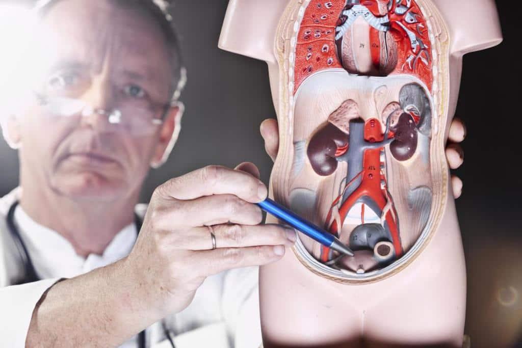 سرطان پروستات و میزان شیوع در مردان قد بلند و چاق