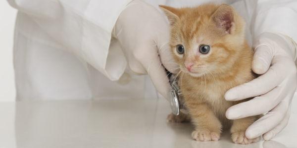 گربه دستیار دامپزشک، داستانی بامزه برای کودکان