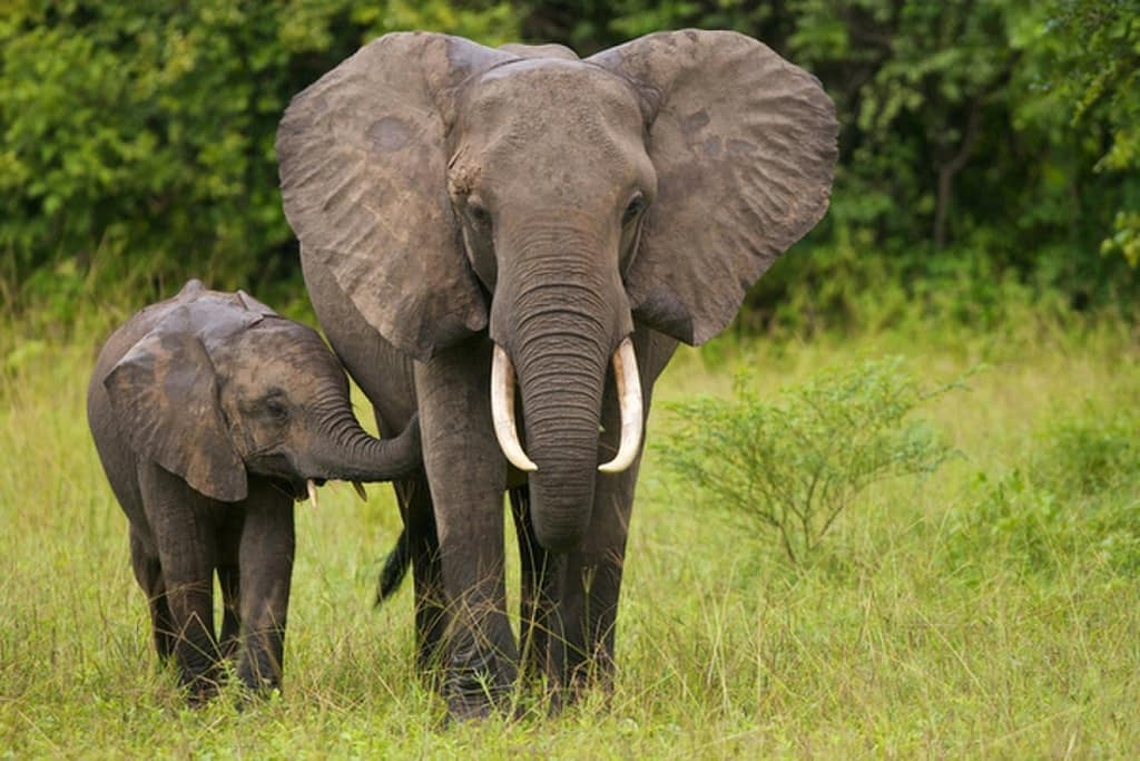 احساسات فیل