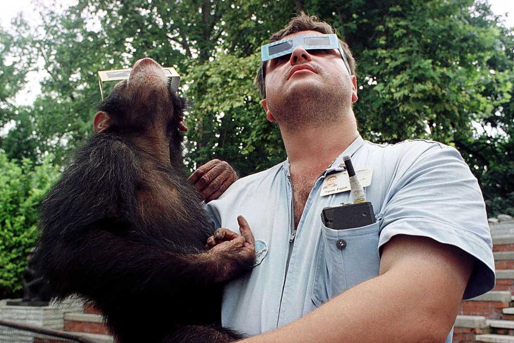 بررسی تاثیر خورشید گرفتگی بر حیوانات