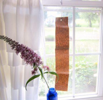 تله چسبی مگس را با وسایلی ارزان و طی چند مرحله ساده در خانه بسازیم