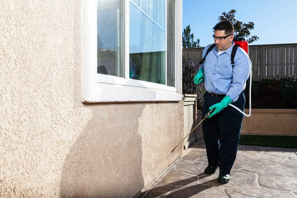 حوادث روزمره حمله آفات به خانه