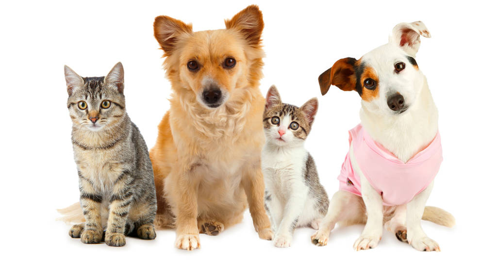 عادت غذایی سگها و گربههای خانگی