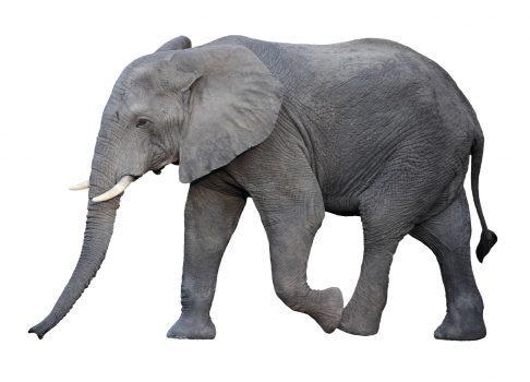 با مترجم Hello in Elephant صحبتهای خود را به زبان فیلها ترجمه کنید