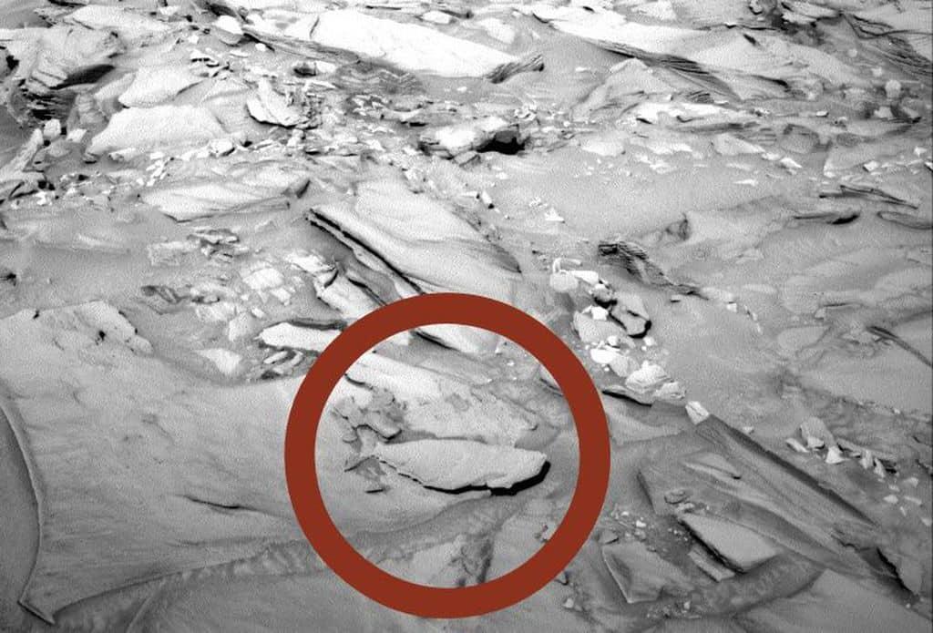 ماهی مریخی