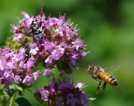 پیوند ژنتیکی زنبورهای عسل با انسانهای مبتلا به اوتیسم کشف شد