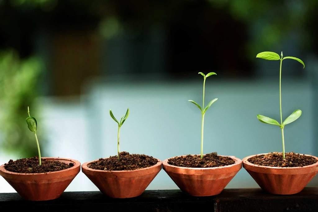 هر چه زودتر ایدهی خود را تجاریسازی و برای ورود به بازار آماده کنید.