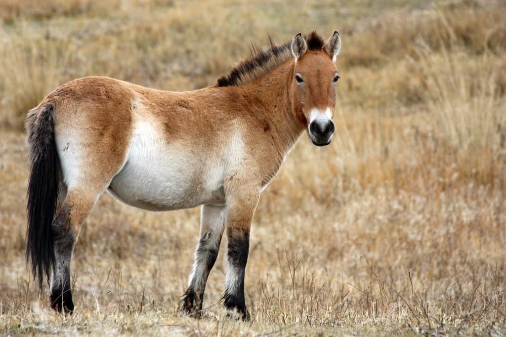 چرا انگشتان اسبها به تدریج و در طول زمان از بین رفت؟