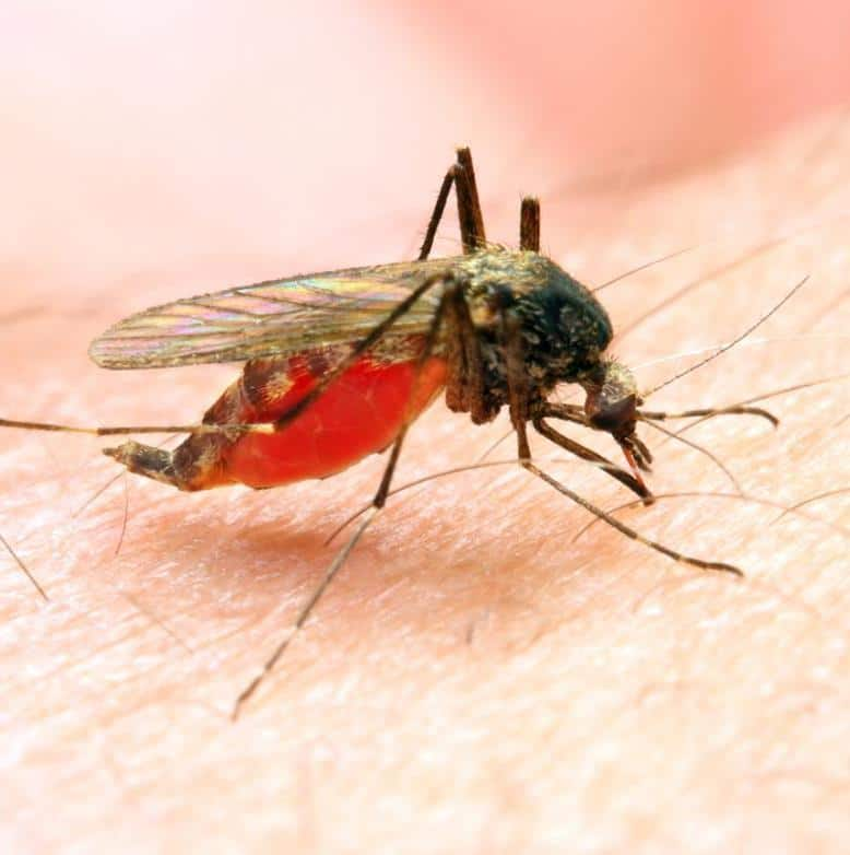 معرفی بیماری مالاریا