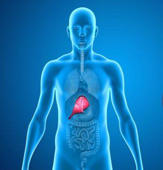 کبد چرب غیرالکلی: نشانه های ابتلا، علل ایجاد،تشخیص و درمان