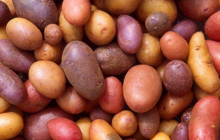 سیب زمینی و معرفی ۱۱ مورد از مزایای باورنکردنی این ماده غذایی