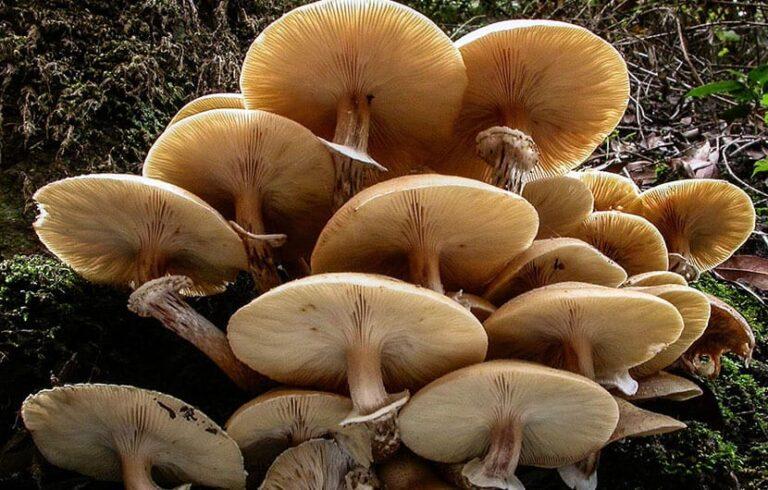 به عقیده دانشمندان قارچها میتوانند دنیا را نجات دهند
