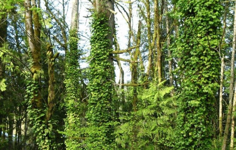خواص پیچک و معرفی ۶ مورد از خواص شگفت انگیز این گیاه
