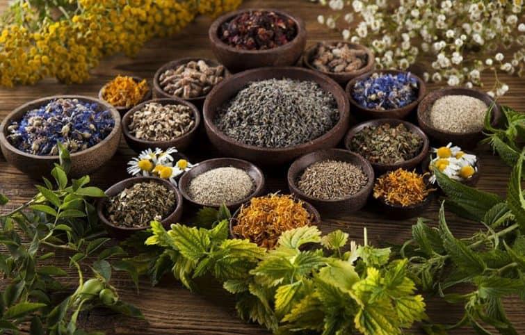 درمان گیاهی در مراقبت پوست، گیاهانی که شما را زیباتر میکنند