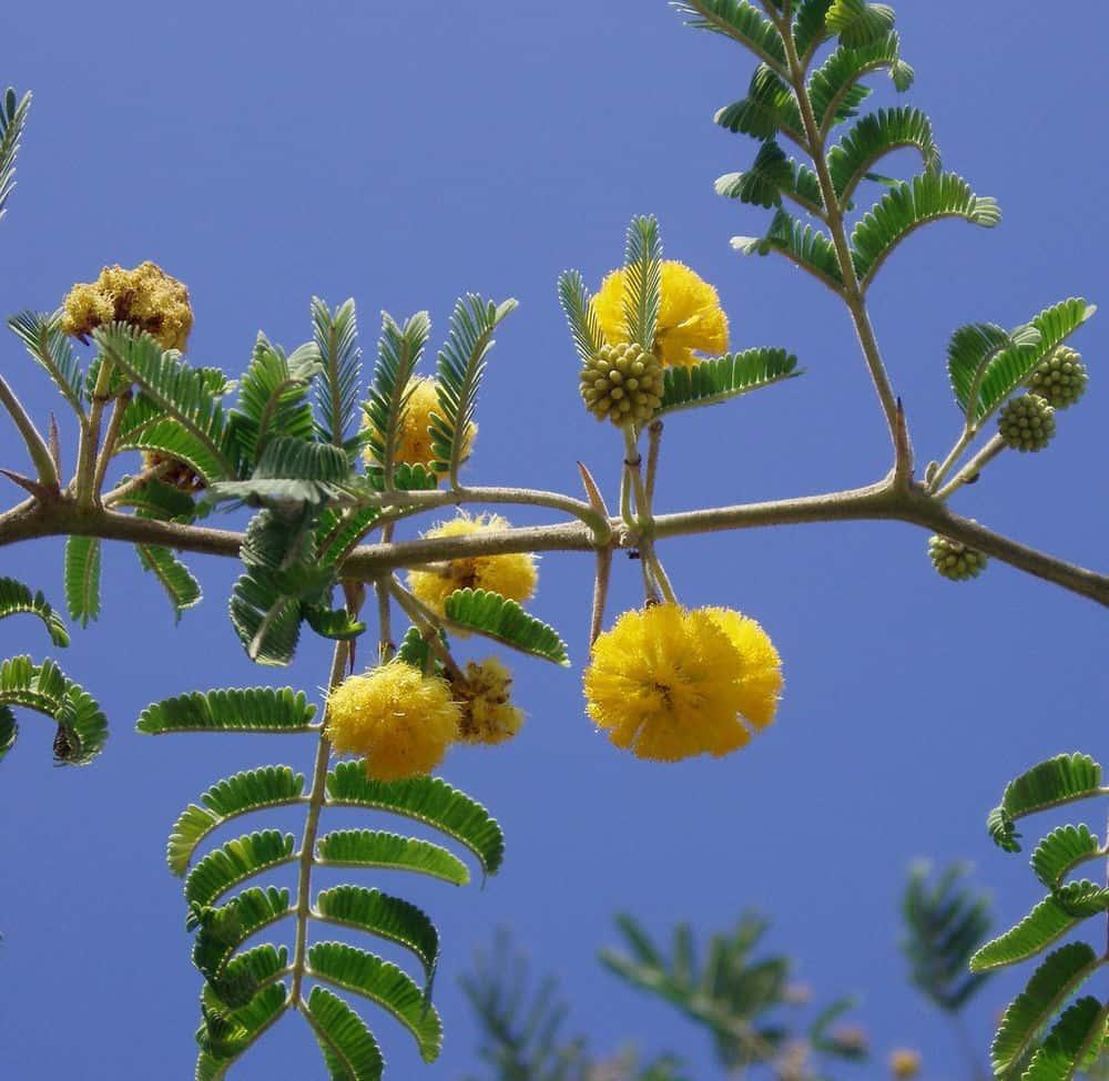 رایحه فریزیا و گل ابریشم