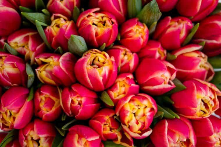 حس لاکچری با گلهای تازه