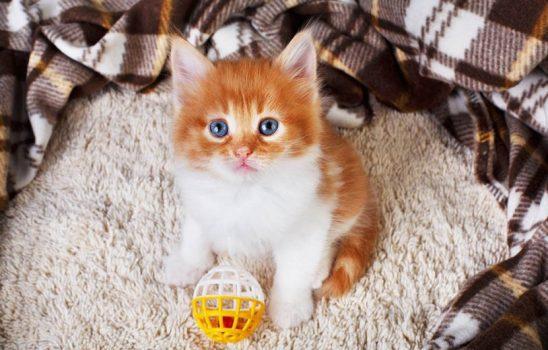 افسردگی گربه خود را با ۱۱ علامت مخفی شناسایی کنید