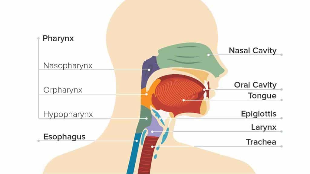 انواع سرطان گلو