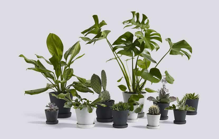 دکوراسیون سبز ، چطور از گیاهان برای تزئین فضای داخل منزل استفاده کنیم؟