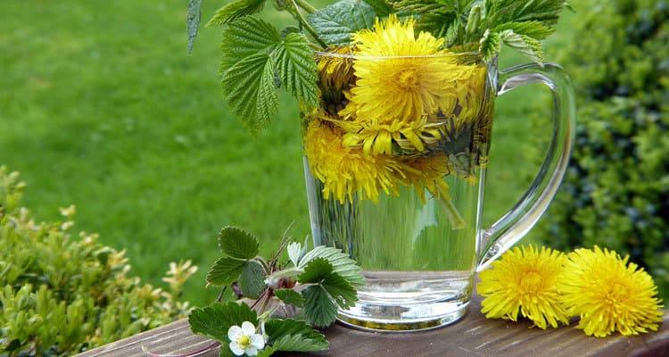 خواص گل قاصدک