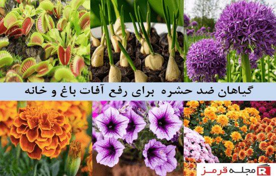 ۱۱ گیاه ضد حشره دارویی که باید در حیاط خانه کاشته شوند