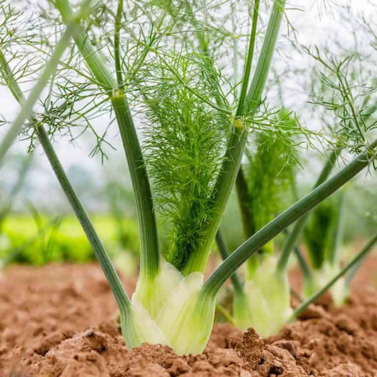 گیاه ضد حشره